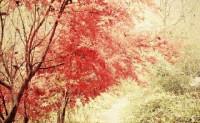 如梦令 ·秋风红叶残羞